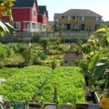 Green Living With Black Gold: Sustainable Agriculture in the Home Garden