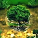 Basic Tips For Green Living